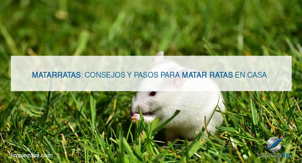 Matarratas consejos y pasos para matar ratas en casa - Como alejar las ratas de la casa ...