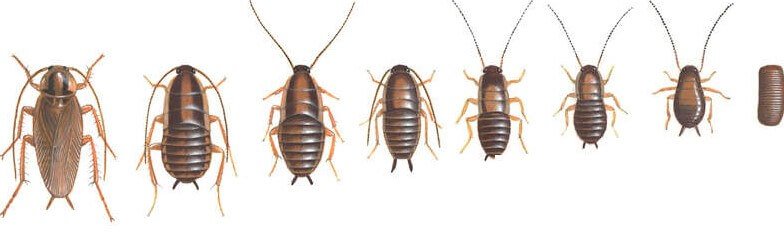 eliminar cucarachas