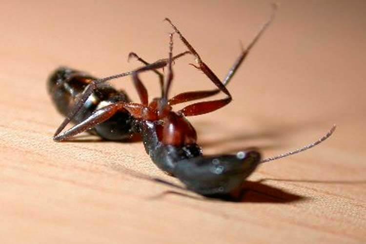 Consejos para eliminar hormigas de forma eficaz y rápida en tu hogar