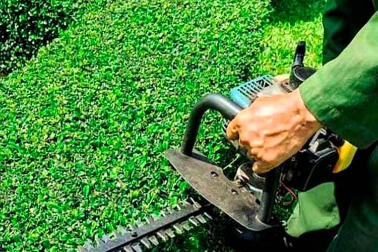 C mo debe ser un servicio de jardiner a para ser perfecto - Servicios de jardineria ...