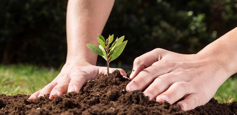 importancia-del-abonado-del-jardín